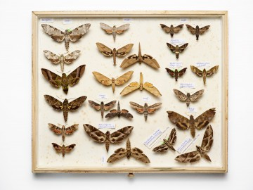 national geographic, moths & butterflies